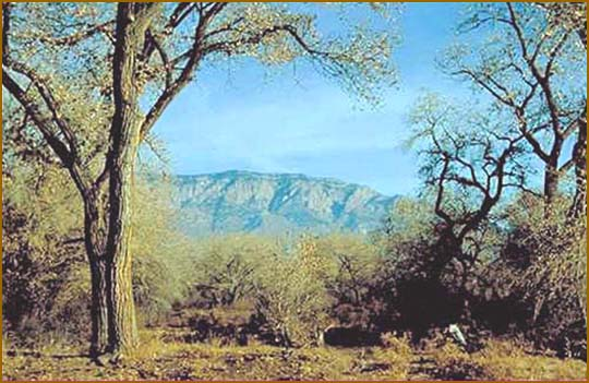 The Sandia Mountains, Albuquerque, NM